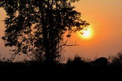 Sun fijó detrás del árbol Foto de archivo libre de regalías
