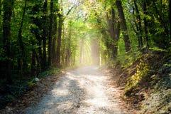 Sun filtrant dans le bois de châtaigne Image libre de droits