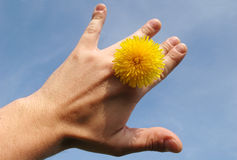 Sun between fingers. Flover between fingers against sky stock photo