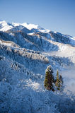 Sun firs 2. Sunlited firs in the snowy mountains Stock Photography