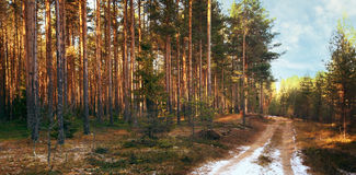 Sun, the first snow forest autmn Stock Images