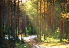 Sun, the first snow forest summer road Stock Photo