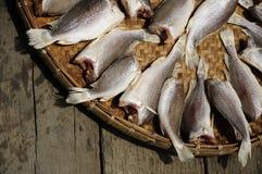 Sun Fish raw food Stock Photography