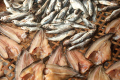 Sun fish in threshing basket . Royalty Free Stock Images