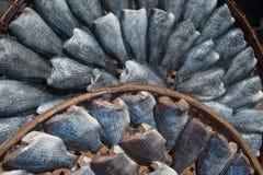 Sun fish in threshing basket . Stock Photos