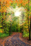 Sun flare autumn trees Royalty Free Stock Images