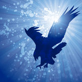 Sun flare eagle Royalty Free Stock Images