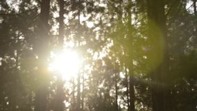Sun flare in forest stock video footage