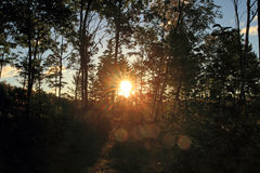 Sun flare in the Maine USA forest Royalty Free Stock Image