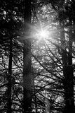 Sun Flare. Sun rays coming through the tree branches royalty free stock photo