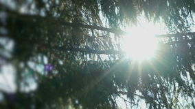Sun flare shining through branches of fir trees stock video