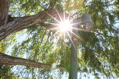 Sun flare through tree branches. Sun flare showing through the leaves and branches of a tree with a lamp post Stock Images