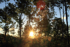 Sun flare through trees in forest Stock Images
