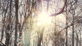 Sun flare in winter trees. Sunrise in winter forest. Winter morning. Sun flare in winter trees. Sunrise in winter forest. Sun shine through tree branches covered stock video footage