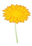Sun flower. Illustration of yellow sunflower on white background Stock Photo