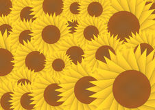 Sun flower abstract background Royalty Free Stock Images
