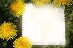 Sun flower card Royalty Free Stock Photos