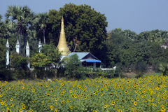 Sun Flowers - Buddhist Stupa - Myanmar (Burma) Royalty Free Stock Image