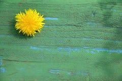 Sun flower dandelion Stock Photo