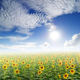 Sun flower fields and clouds sky Royalty Free Stock Images