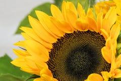 Sun Flower, Flower, Blossom, Bloom Stock Photos