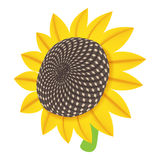 Sun flower icon, cartoon style. Sun flower icon in cartoon style isolated on white background. Plant symbol vector illustration Stock Images