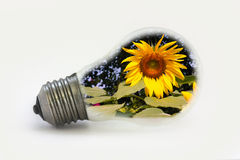 Sun flower in light bulbs. Royalty Free Stock Photo