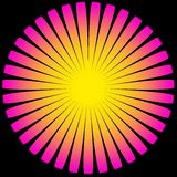 Sun Flower Magenta Yellow Royalty Free Stock Image