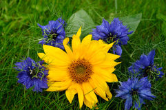 Sun flower and Nigella Stock Photography