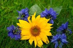 Sun flower and Nigella Stock Photography