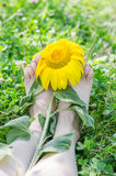 Sun Flower on pair of legs in the garden Royalty Free Stock Photos