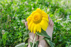 Sun Flower on pair of legs in the garden Stock Image