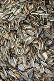 Sun flower seed. Dry background Stock Image