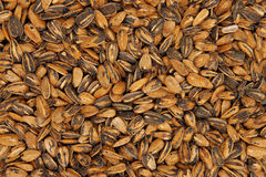 Sun flower seeds Royalty Free Stock Photo