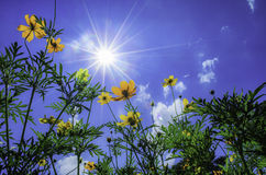 The sun and flower Stock Image