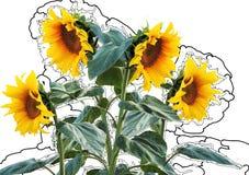 Sun Flower, Summer, Sun, Plant Royalty Free Stock Images