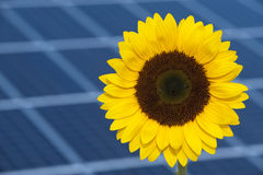Sun flower and sun energy. Sun flower and sun panel as symbol for new regenerative energy Royalty Free Stock Photos