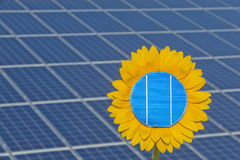Sun flower and sun energy Stock Photography