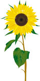 Sun Flower Vector. The Sun Flower Yellow Green Leaf for Sticker Cut @ Vinil Design Of Flowers Abstrac Logo Nature Flowers In Hot Stock Image