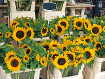 Sun flowers. At flower market in Amsterdam Royalty Free Stock Photography