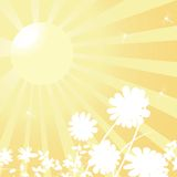 Sun and flowers. Background, spring concept Stock Photography