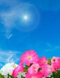 Sun and flowers Stock Photos