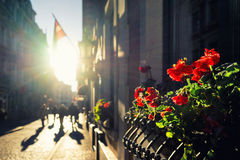 Sun, flowers and flags on the street of Old Riga Stock Images