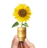 Sun flowers growing on coins Royalty Free Stock Photography
