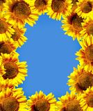 Sun flowers over sky Royalty Free Stock Images