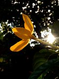 Sun, flowers, sky, nature, pretty Stock Photo