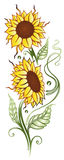 Sun flowers, summer time Stock Photography