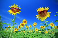 The Sun of Flowers with sunglasses Royalty Free Stock Image