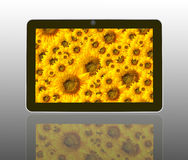 sun flowers in theTablet Computer Stock Images