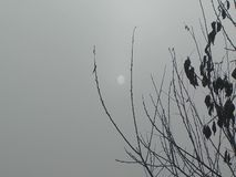 Sun in the fog stock footage